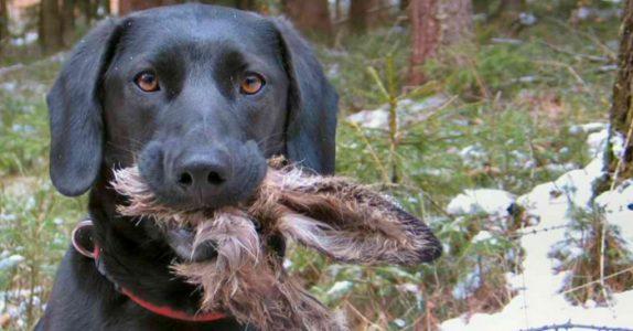 Mannen prøver å skjule hva hunden hadde gjort. Men sannheten? Jeg ler så tårene triller!