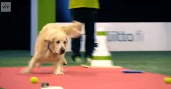 Hunden begynner på løpet i konkurransen. På slutten? Publikum ler så tårene triller!